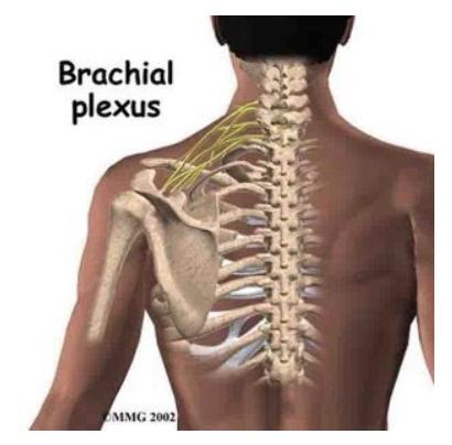 Huntington Beach chiropractor clinic shoulder pain